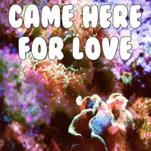 Came Here For Love - Sigala & Ella Eyre