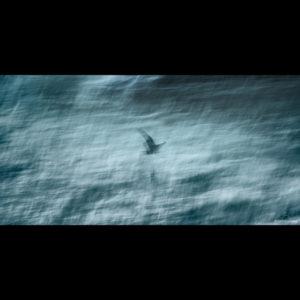 Blue Heron - William French